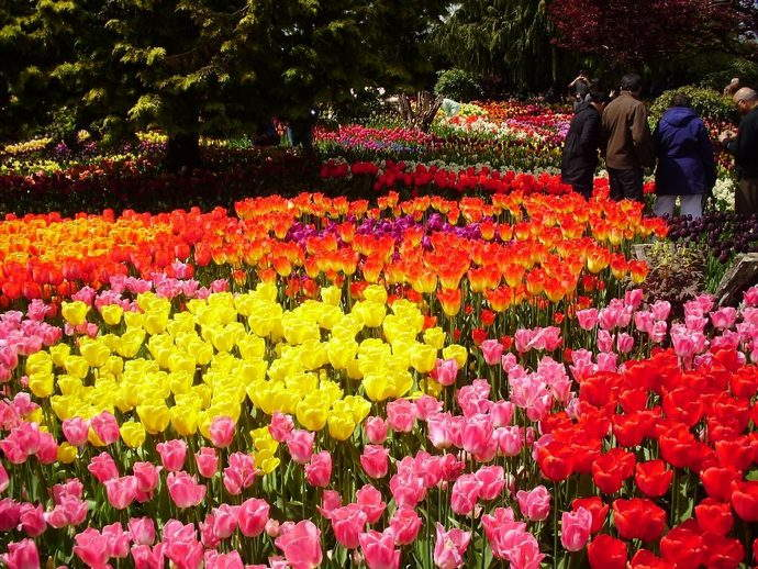 Tulip Garden. Image by Sporst via Creative Commons.