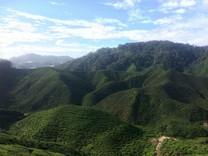 Cameron-highlands-cravings-feature
