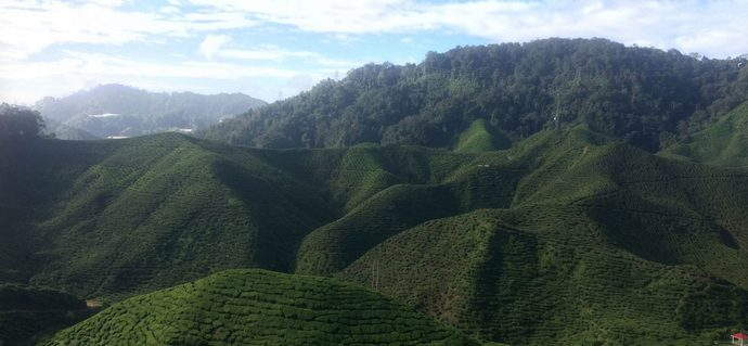 Cameron Highlands: A Photo Diary