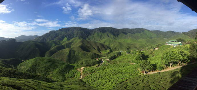 cameron-highlands-view-cravings-feature