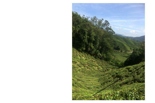 cameronhighlands-cravings-feature