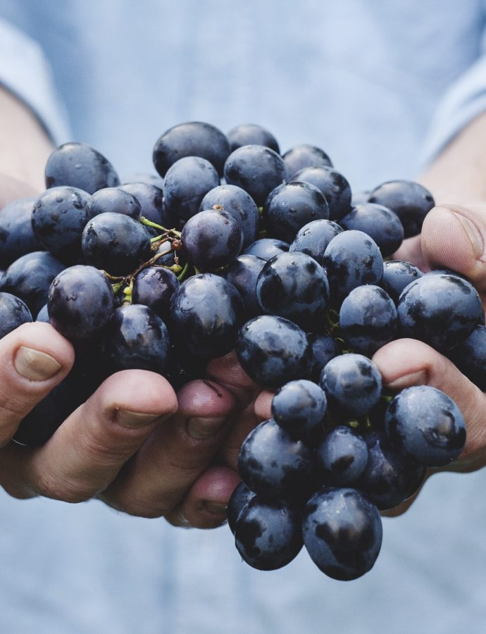 Organic Food: What it is and where to find it!