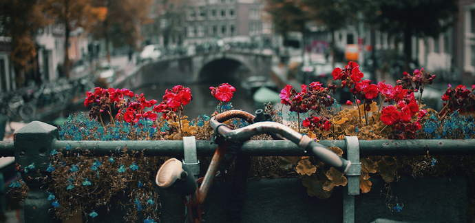 Amsterdam: 10 Things to See and Do!