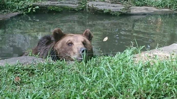bear-punchak-animal-safari-feature