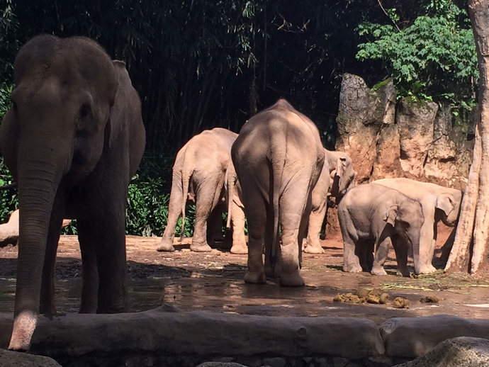 elephants-punchak-cravings-feature