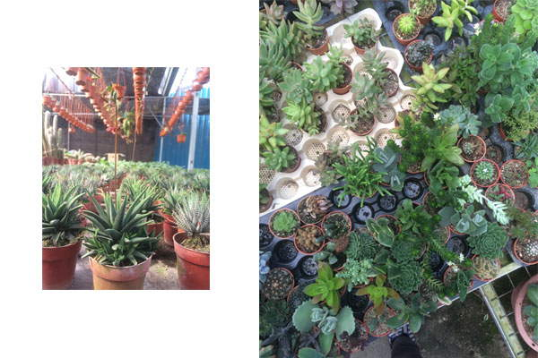 plants-cravings-feature-cameron-highlands