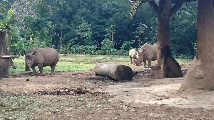rhino-cravings-feature-indonesia